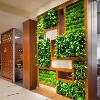 Вертикальное озеленение, что это такое?