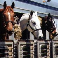 Через границу Омской области в Казахстан пытались вывести 45 коней