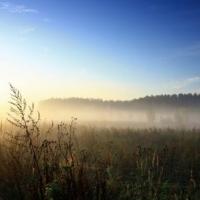 Жару, туманы и дожди обещают синоптики омичам