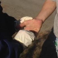 Полиция поймала омича в зарослях конопли