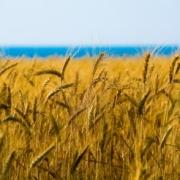 Калининградцы построят в Прииртышье зернохранилище на 60 гектарах