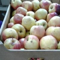 В Омске уничтожили партию польских яблок