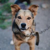 В этом году от укусов животных пострадали 2 113 жителей Омской области