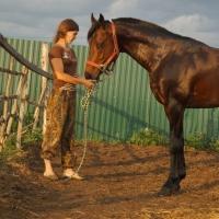 В Кормиловском районе Омской области у девушки украли скаковую лошадь