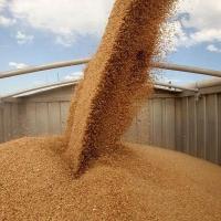 Омские аграрии выручили почти 60 миллионов рублей с продажи зерна
