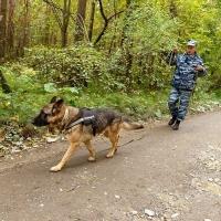 Служебная овчарка Лютый помогла задержать вора со станции Омск-Сортировочный