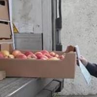 В Омской области задержали крупную партию нелегальных яблок