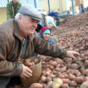 В Омске подешевели картофель, сахар и рыба