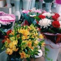 Омские власти ищут поставщика живых цветов