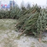 В Омске ожидается сохранение прошлогодних цен на елки