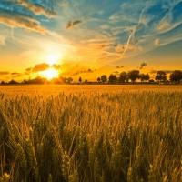 Омским аграриям добавят 20 тысяч гектаров земли