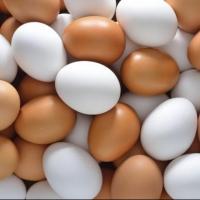 В 11 млн яиц в Германии нашли химикат фипронил