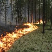 На спасение лесов Омской области от пожаров выделили 52 миллиона