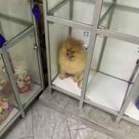 В одном из супермаркетов Омска на хранение в камере оставили шпица