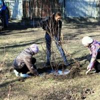 В Омске во время урагана высадили 6 тысяч деревьев