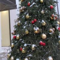 В новогоднюю ночь омичи смогут добраться до главной городской елки на автобусах