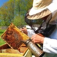 Все пчеловоды Омской области оказались «в тени»