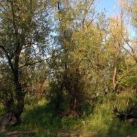 В Омской области начинают готовиться к пожароопасному сезону 2017