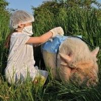 В Омской области выбрали лучшего ветеринарного врача