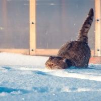 В Омске будет тепло и снежно