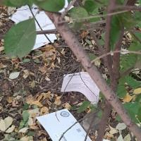 Квитанции и письма омичей обнаружили под кустом