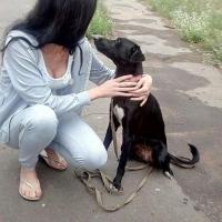 В Омске неизвестный украл собаку Дарку, привязанную возле магазина «Холидей»