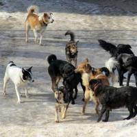 Омские следователи просят откликнуться мать пострадавшего от собак мальчика