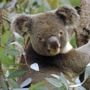 Незабываемые туры в Австралию