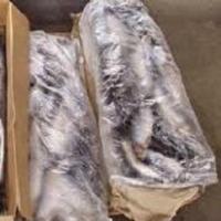 На границе Омской области задержали 662 кг замороженной рыбы
