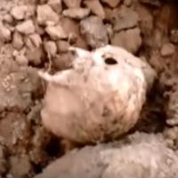 СК: Кости на стройке спортивного комплекса в Омске принадлежат животному