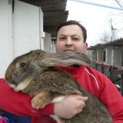 """Омичам покажут кроликов на """"Сибирской агропромышленной неделе-2012"""""""