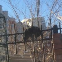 В Омске неизвестные повесили на забор кошку