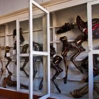 Омские сталкеры сфотографировали бестиарий: заброшенную кафедру анатомии