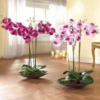 Как правильно ухаживать за орхидеями в домашних условиях