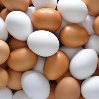 В Омск пытались провести 18 тонн подозрительных яиц