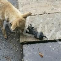 Неравнодушные омичи помогли собаке спасти щенков во время ливня