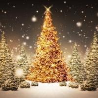 Главная омская елка начнет работу 26 декабря