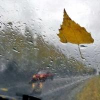 Ветер и дождь придут в Омскую область