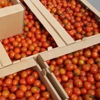 Омские томаты «прирастут» благодаря  антитурецким санкциям