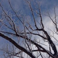 Жители Левобережья в Омске обнаружили на дереве тело молодой женщины