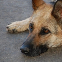 В Омске убивали бродячих собак после отлова