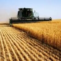 Омские аграрии перевыполнили план по уборке зерна