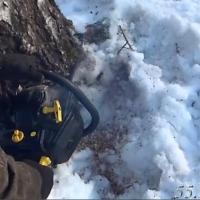 Ущерб от «черных лесорубов» в Омской области возрос до 30 млн рублей