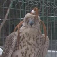 В Омской области задержан иностранец, пытавшийся вывезти редких птиц за пределы России