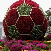 В Омске создадут большой футбольный мяч из цветов