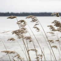 Синоптики предупреждают омичей о сильном ветре