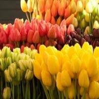Выбор и приобретение цветов в Интернет-магазинах