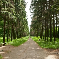 Омской предпринимательнице не отдали дендропарк