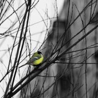 С 2018 года туристы могут понаблюдать за птицами в Омской области