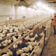 Омская область планирует выручить с мяса 191 миллион